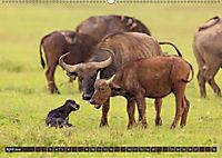 Auf Safari in Kenia 2018 (Wandkalender 2018 DIN A2 quer) - Produktdetailbild 4