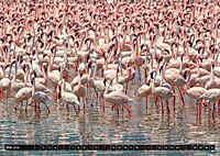 Auf Safari in Kenia 2018 (Wandkalender 2018 DIN A2 quer) - Produktdetailbild 5