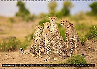 Auf Safari in Kenia 2018 (Wandkalender 2018 DIN A2 quer) - Produktdetailbild 9