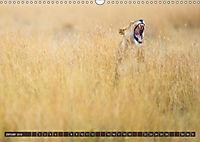 Auf Safari in Kenia 2018 (Wandkalender 2018 DIN A3 quer) - Produktdetailbild 1