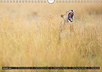 Auf Safari in Kenia 2018 (Wandkalender 2018 DIN A4 quer) - Produktdetailbild 1