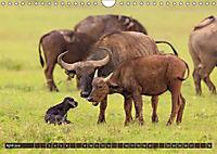 Auf Safari in Kenia 2018 (Wandkalender 2018 DIN A4 quer) - Produktdetailbild 3
