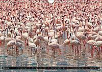 Auf Safari in Kenia 2018 (Wandkalender 2018 DIN A4 quer) - Produktdetailbild 4