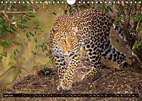 Auf Safari in Kenia 2018 (Wandkalender 2018 DIN A4 quer) - Produktdetailbild 5