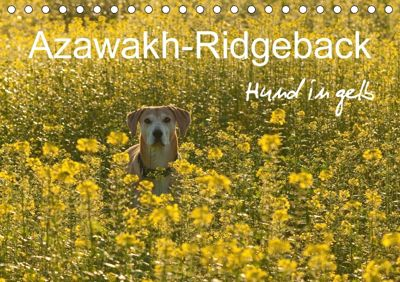 Azawakh-Ridgeback Hund in gelb (Tischkalender 2018 DIN A5 quer), Meike Bölts
