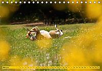 Azawakh-Ridgeback Hund in gelb (Tischkalender 2018 DIN A5 quer) - Produktdetailbild 5