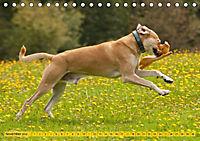 Azawakh-Ridgeback Hund in gelb (Tischkalender 2018 DIN A5 quer) - Produktdetailbild 11