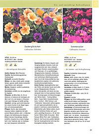 Balkon & Kübelpflanzen - Produktdetailbild 11