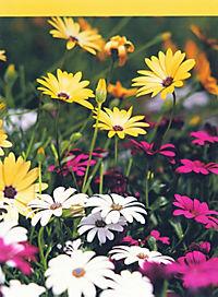 Balkon & Kübelpflanzen - Produktdetailbild 10