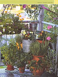 Balkon & Kübelpflanzen - Produktdetailbild 13
