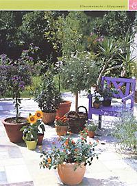 Balkon & Kübelpflanzen - Produktdetailbild 7
