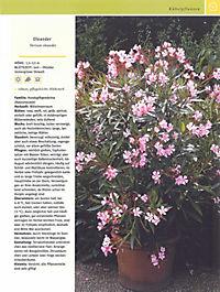 Balkon & Kübelpflanzen - Produktdetailbild 12