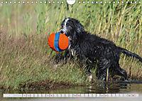 BEARDED COLLIES 2018 (Wandkalender 2018 DIN A4 quer) Dieser erfolgreiche Kalender wurde dieses Jahr mit gleichen Bildern - Produktdetailbild 4