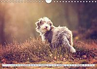 BEARDED COLLIES 2018 (Wandkalender 2018 DIN A4 quer) Dieser erfolgreiche Kalender wurde dieses Jahr mit gleichen Bildern - Produktdetailbild 8