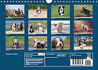 BEARDED COLLIES 2018 (Wandkalender 2018 DIN A4 quer) Dieser erfolgreiche Kalender wurde dieses Jahr mit gleichen Bildern - Produktdetailbild 13