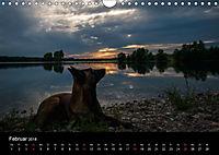 Belgische Schäferhunde - Der Malinois im Licht (Wandkalender 2018 DIN A4 quer) - Produktdetailbild 2