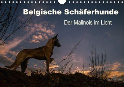 Belgische Schäferhunde - Der Malinois im Licht (Wandkalender 2018 DIN A4 quer), Tanja Brandt