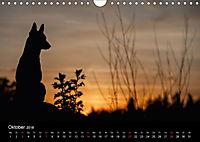 Belgische Schäferhunde - Der Malinois im Licht (Wandkalender 2018 DIN A4 quer) - Produktdetailbild 10