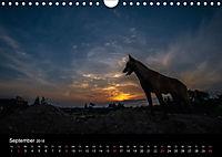 Belgische Schäferhunde - Der Malinois im Licht (Wandkalender 2018 DIN A4 quer) - Produktdetailbild 9