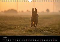 Belgische Schäferhunde - Der Malinois im Licht (Wandkalender 2018 DIN A4 quer) - Produktdetailbild 7