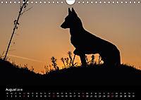 Belgische Schäferhunde - Der Malinois im Licht (Wandkalender 2018 DIN A4 quer) - Produktdetailbild 8