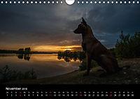 Belgische Schäferhunde - Der Malinois im Licht (Wandkalender 2018 DIN A4 quer) - Produktdetailbild 11
