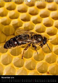 Bienenkalender (Wandkalender 2018 DIN A3 hoch) - Produktdetailbild 11
