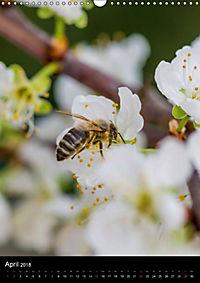 Bienenkalender (Wandkalender 2018 DIN A3 hoch) - Produktdetailbild 4
