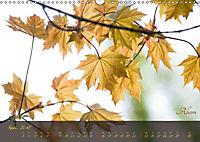 Blätter im Laufe des Jahres (Wandkalender 2018 DIN A3 quer) - Produktdetailbild 4