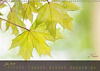 Blätter im Laufe des Jahres (Wandkalender 2018 DIN A3 quer) - Produktdetailbild 7