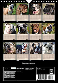 Bulldoggen-Gesichter (Wandkalender 2018 DIN A4 hoch) Dieser erfolgreiche Kalender wurde dieses Jahr mit gleichen Bildern - Produktdetailbild 13