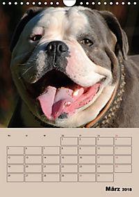 Bulldoggen-Gesichter (Wandkalender 2018 DIN A4 hoch) Dieser erfolgreiche Kalender wurde dieses Jahr mit gleichen Bildern - Produktdetailbild 3