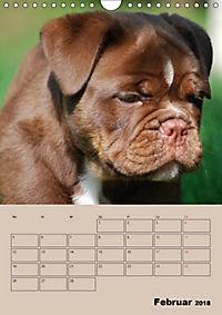 Bulldoggen-Gesichter (Wandkalender 2018 DIN A4 hoch) Dieser erfolgreiche Kalender wurde dieses Jahr mit gleichen Bildern - Produktdetailbild 2