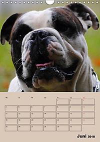 Bulldoggen-Gesichter (Wandkalender 2018 DIN A4 hoch) Dieser erfolgreiche Kalender wurde dieses Jahr mit gleichen Bildern - Produktdetailbild 6