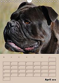 Bulldoggen-Gesichter (Wandkalender 2018 DIN A4 hoch) Dieser erfolgreiche Kalender wurde dieses Jahr mit gleichen Bildern - Produktdetailbild 4