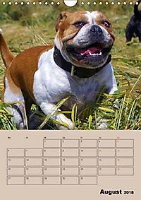 Bulldoggen-Gesichter (Wandkalender 2018 DIN A4 hoch) Dieser erfolgreiche Kalender wurde dieses Jahr mit gleichen Bildern - Produktdetailbild 8