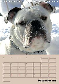 Bulldoggen-Gesichter (Wandkalender 2018 DIN A4 hoch) Dieser erfolgreiche Kalender wurde dieses Jahr mit gleichen Bildern - Produktdetailbild 12