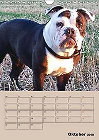 Bulldoggen-Gesichter (Wandkalender 2018 DIN A4 hoch) Dieser erfolgreiche Kalender wurde dieses Jahr mit gleichen Bildern - Produktdetailbild 10
