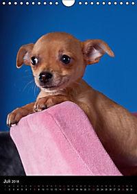 Chihuahua Welpen (Wandkalender 2018 DIN A4 hoch) - Produktdetailbild 7