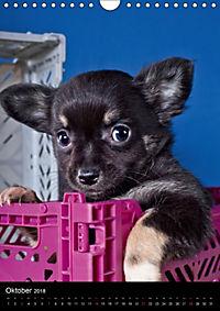 Chihuahua Welpen (Wandkalender 2018 DIN A4 hoch) - Produktdetailbild 10