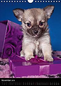 Chihuahua Welpen (Wandkalender 2018 DIN A4 hoch) - Produktdetailbild 11