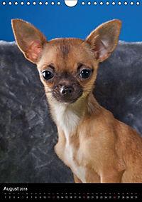 Chihuahua Welpen (Wandkalender 2018 DIN A4 hoch) - Produktdetailbild 8