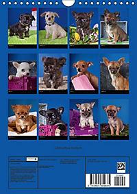 Chihuahua Welpen (Wandkalender 2018 DIN A4 hoch) - Produktdetailbild 13