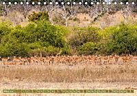 Chobe River - Eine spannende Flussfahrt in Botswana (Tischkalender 2018 DIN A5 quer) - Produktdetailbild 3