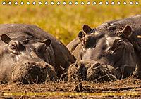 Chobe River - Eine spannende Flussfahrt in Botswana (Tischkalender 2018 DIN A5 quer) - Produktdetailbild 5