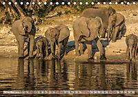 Chobe River - Eine spannende Flussfahrt in Botswana (Tischkalender 2018 DIN A5 quer) - Produktdetailbild 11