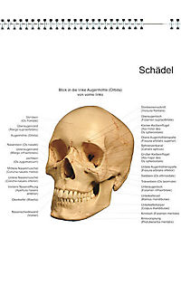 Das menschliche Skelett, Studien-Posterbuch - Produktdetailbild 4