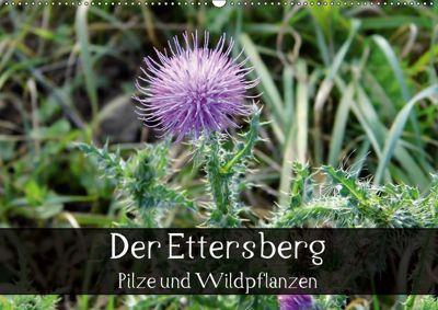 Der Ettersberg - Pilze und Wildpflanzen (Wandkalender 2018 DIN A2 quer), Jan Schachtschabel