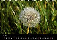Der Ettersberg - Pilze und Wildpflanzen (Wandkalender 2018 DIN A2 quer) - Produktdetailbild 7