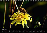 Der Ettersberg - Pilze und Wildpflanzen (Wandkalender 2018 DIN A2 quer) - Produktdetailbild 3